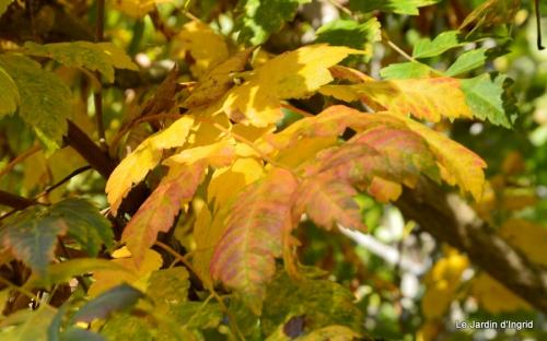 jardin automne,Arya avec Nicky 002.JPG