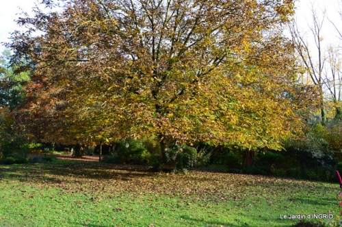les arbres en automne,cabane 124.JPG
