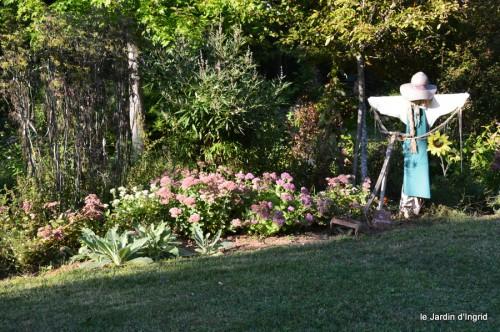 jardin,asters,fleurs blanches,chatte,rosiers roses 065.JPG