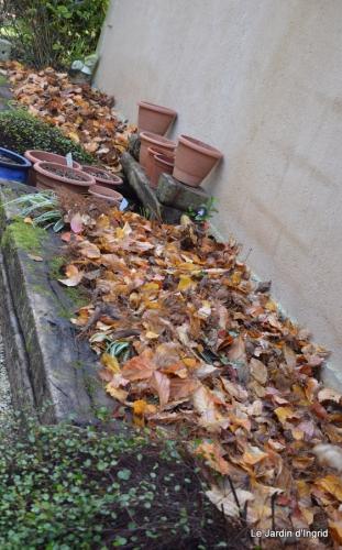 poule d'eau,travaux et dernières fleurs,tonte,sapin bois 040.JPG