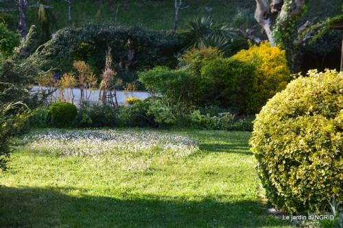 jardin confiné ,osier,magnolia jaune 166.JPG