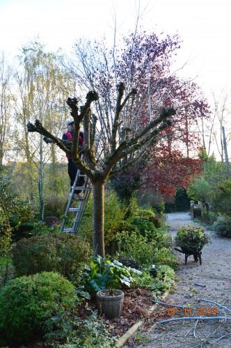 Ciron,feuilles d'automne,safran,taille érable 158.JPG