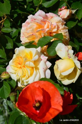 fête de la fraise Vergt,roses jardin 074.JPG