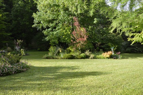 jardin,premières roses,colline,avant l'orage 118.JPG