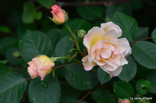 jardin,roses,cabane 074.JPG