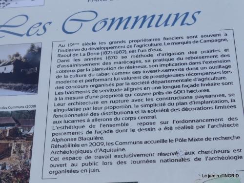 cornouiller,Limeuil,Campagne, 215.JPG