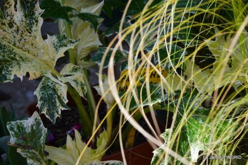 Cadouin,ancolies,roses,pollen,osier,photos Fabien,coquelicots 015.JPG