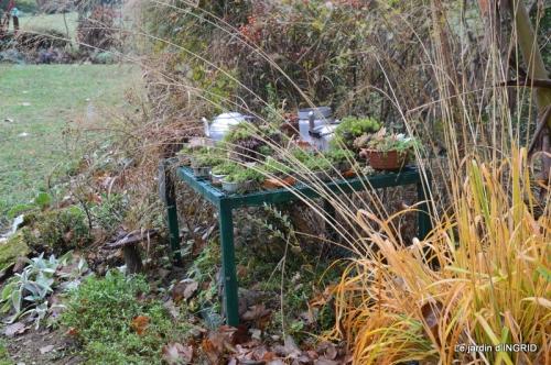 Brouillard,cypres chauve,jardinage 026.JPG