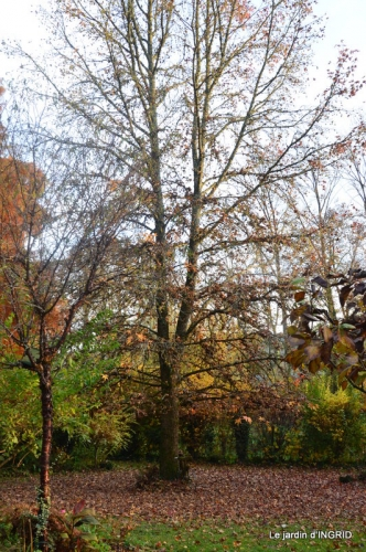 canal,automne,tonte des feuilles 069.JPG