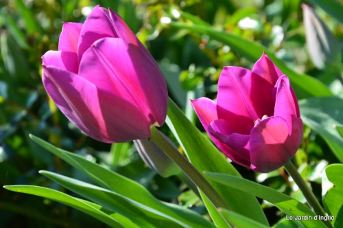 tour du jardin printemps 036.JPG