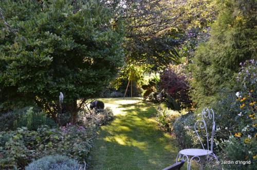 jardin,asters,fleurs blanches,chatte,rosiers roses 033.JPG