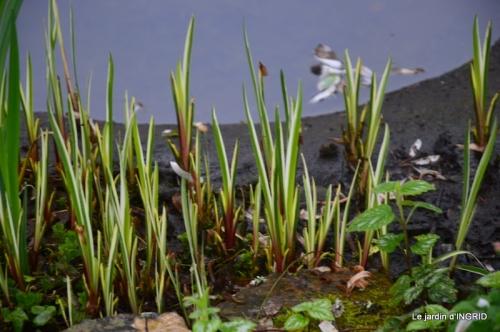 semis,bassin,tour du jardin 071.JPG