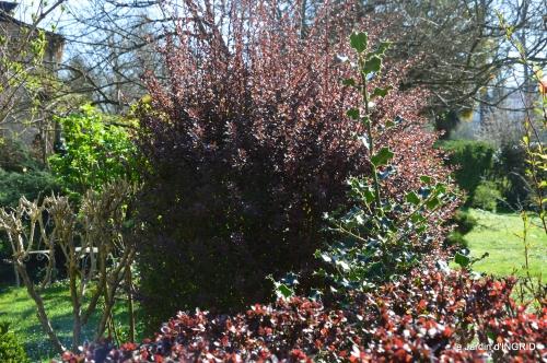 Rouge,narcisse,jardin 043.JPG