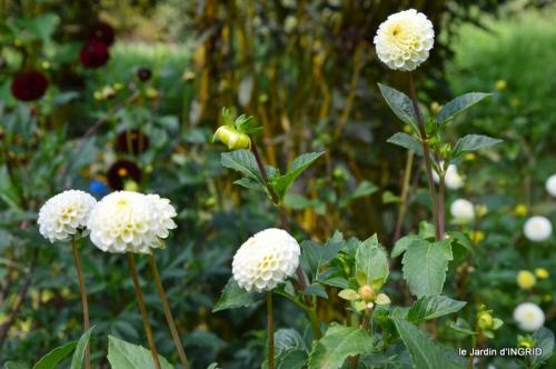 jardin ,bouquet 079.JPG