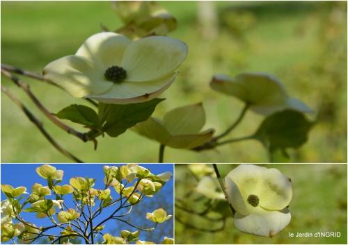 2016-04-25 ancolies,Neuvic,filles,jardin4.jpg