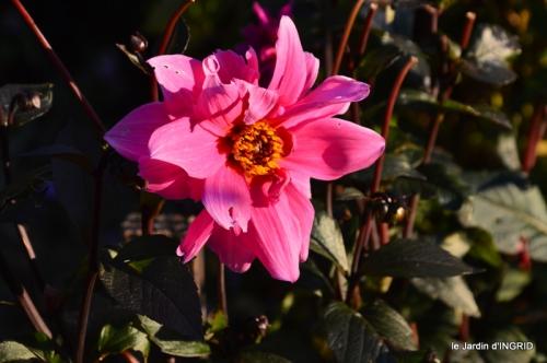 jardin Mme Perichou,grandes fleurs,bouquet,jardin 132.JPG