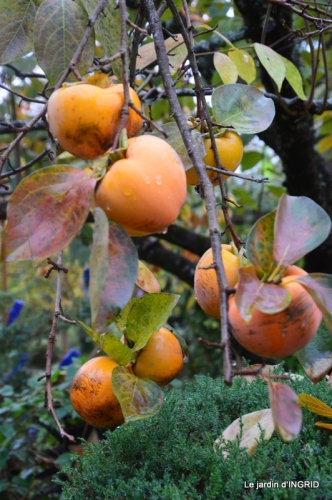 jardin automne 002.JPG