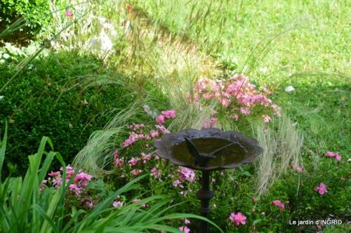 mon jardin,dégats buis, 090.JPG