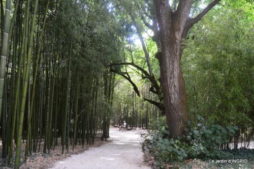 bambous Roque Gageac,jardin,bouquet 158.JPG