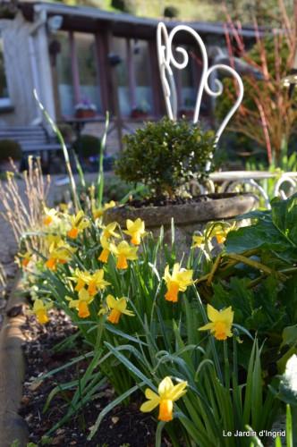 bouquet mamy,jacinthes,semis,jardin 047.JPG