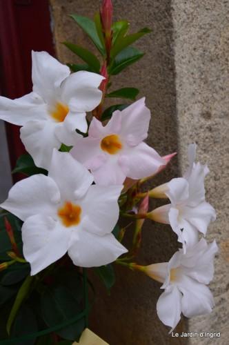 canal,fleurs blanches,marguerites,LE FLEIX,osier 016.JPG