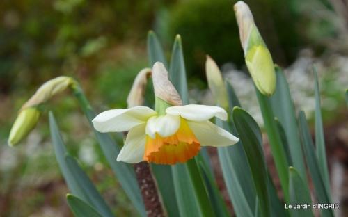 printemps,osier,tipi 038.JPG