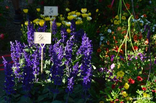 coquelicots,fête des fleurs Lalinde,fouleix,jardinage 045.JPG