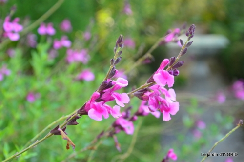 fleurs petit jardin,bouquets,grand jardin 039.JPG