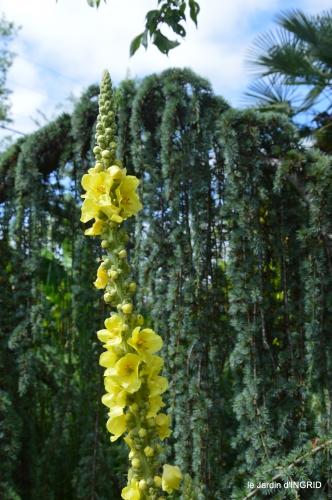 jardin,papillons,Cadouin,légumes,Sophie, 076.JPG