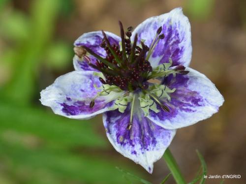 jardin,papillons,Cadouin,légumes,Sophie, 178-001.JPG