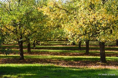 ménage automne,plectanthrus,feuillages 035.JPG