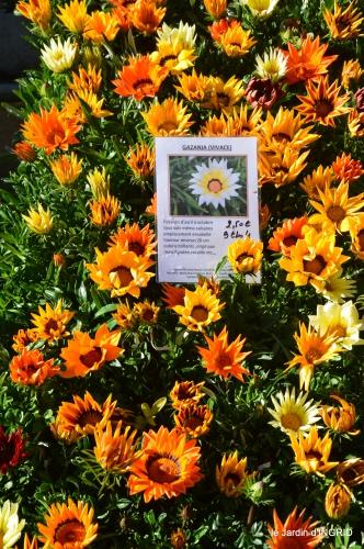 coquelicots,fête des fleurs Lalinde,fouleix,jardinage 073.JPG