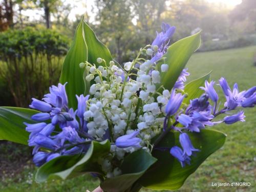 colline,orchidée,nature,jardin fleuri 089.JPG