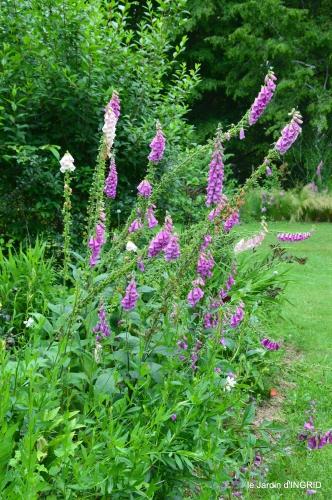 jardin,chez Bernadette,puces,cygnes,pluie 148.JPG