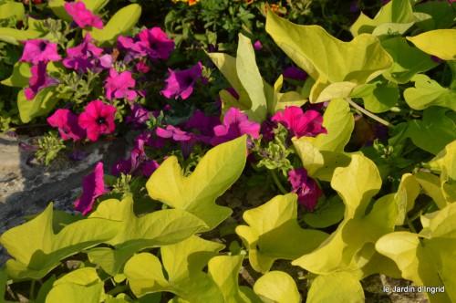 jardin,fruits,Caro,papillons,manthe religieuse,Lalinde 076.JPG