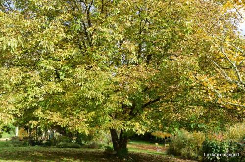 automne,arbres,inondation 102.JPG