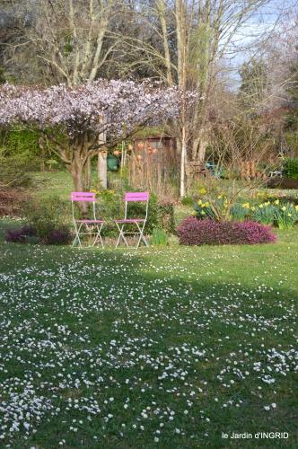 primevères ,jardin 033.JPG