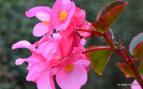 brume,dentelles,fleurs,Noel Jardiland 019.JPG