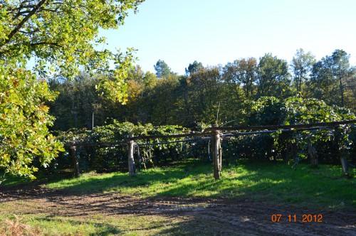 Ciron,feuilles d'automne,safran,taille érable 156.JPG