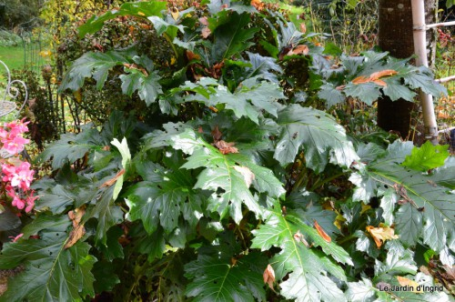automne,arbres,inondation 115.JPG