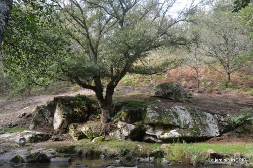 la Sedelle,étang de Riault,cyclamens 066.jpg