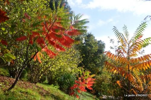 feuillages d'automne et tonte de la pelouse 013.JPG