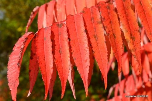 feuillages d'automne et tonte de la pelouse 006.JPG