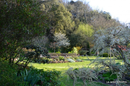 Bergerac, jardin ,arbres fruitiers,printemps 042.JPG