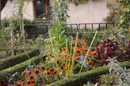 champignons,citrouilles,st Mayme de Péreyrol,fuschias,jardin aut 148.JPG