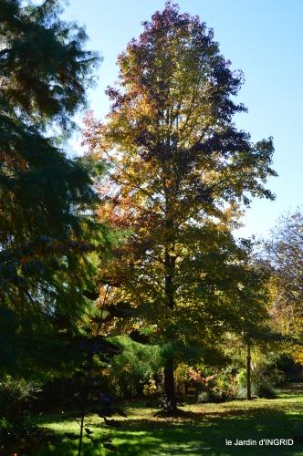 jardin automne,voisinage,canal 137.JPG