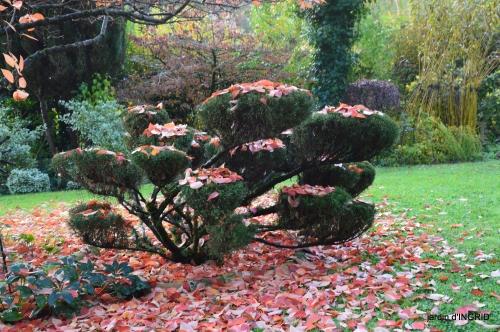 couleurs d'automne,bouquet,lune 075.JPG