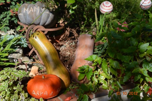 citrouilles,jardin,Combarel 004.JPG