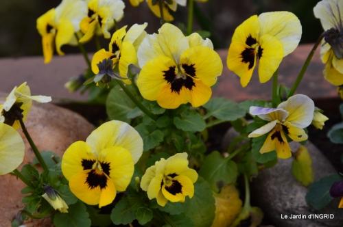 semis,taille,tonte,tour du jardin 028.JPG