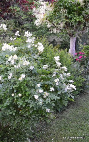 fête de la fraise Vergt,roses jardin 079.JPG